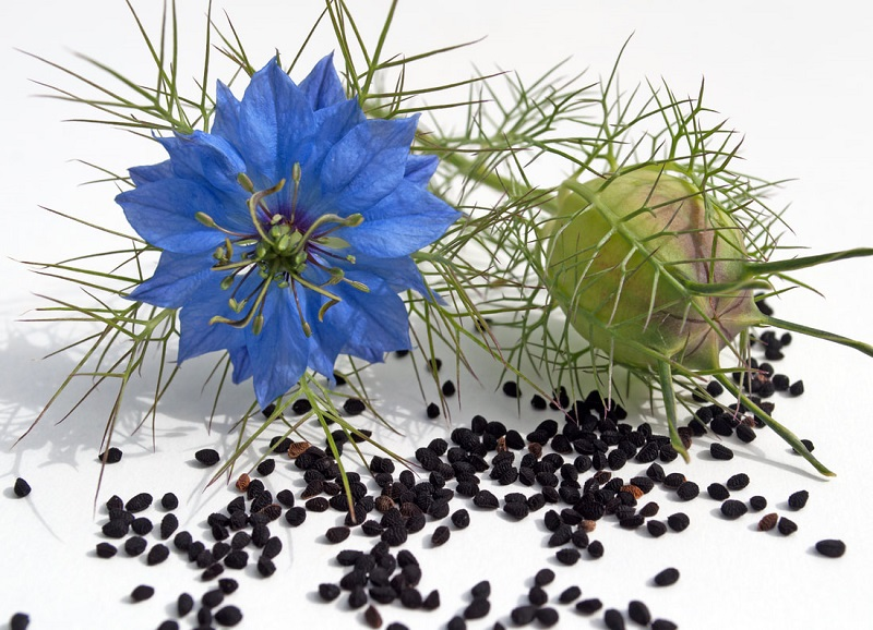 Тминное масло лечебные свойства и противопоказания